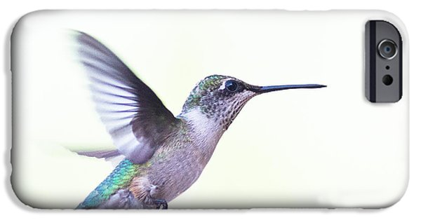 Arkansas iPhone Cases - Hummer iPhone Case by Annette Hugen
