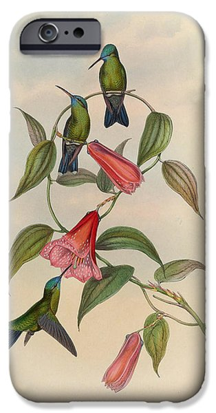 Botanical Drawings iPhone Cases - Hummingbirds iPhone Case by Unknown Artist