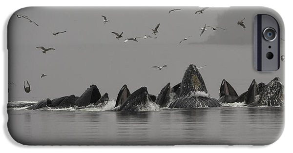 Chatham iPhone Cases - Humpbacks Feeding in the Mist iPhone Case by Lisa Hufnagel