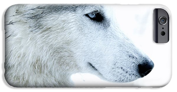 Husky iPhone Cases - Husky iPhone Case by Stylianos Kleanthous