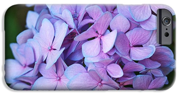 Lavender iPhone Cases - Hydrangea iPhone Case by Rona Black
