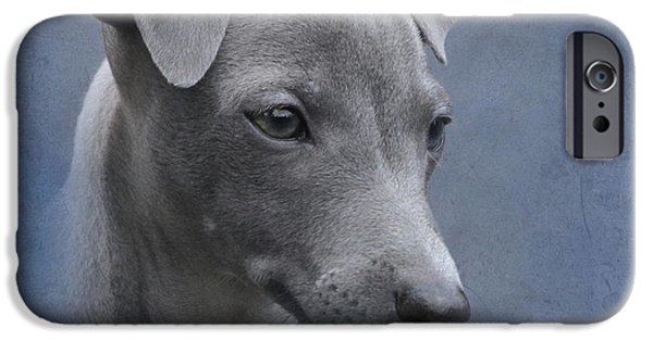 Greyhound Photographs iPhone Cases - Italian Greyhound Puppy iPhone Case by Angie Vogel