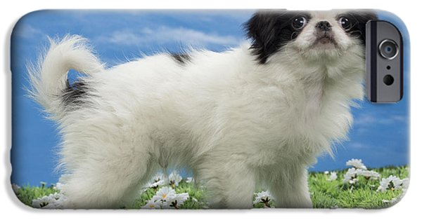 Japanese Chin Puppy iPhone Cases - Japanese Chin Puppy iPhone Case by Jean-Michel Labat