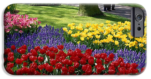 Tulips Photographs iPhone Cases - Keukenhof Garden, Lisse, The Netherlands iPhone Case by Panoramic Images