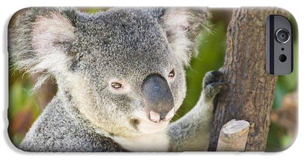 Koala iPhone Cases - Koala Bear iPhone Case by William H. Mullins