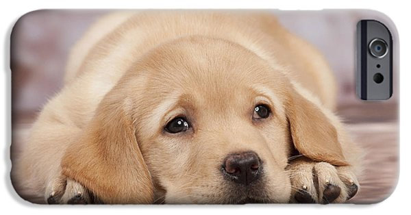 Dog Close-up iPhone Cases - Labrador Puppy Dog iPhone Case by Jean-Michel Labat