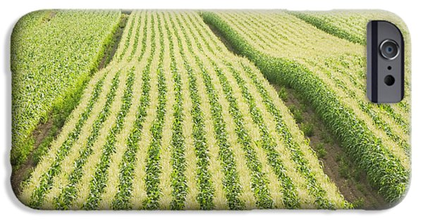 Corn iPhone Cases - Late Summer Corn Field In Maine iPhone Case by Keith Webber Jr