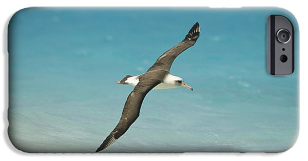 Albatross iPhone Cases - Laysan Albatross Flying Midway Atoll iPhone Case by Tui De Roy