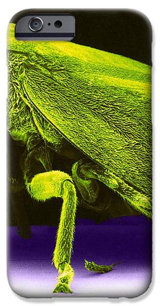 Leafhopper, Sem iPhone Case by David M. Phillips