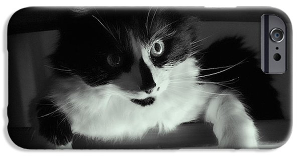 Gray Hair iPhone Cases - Low Key Cat iPhone Case by Linsey Williams