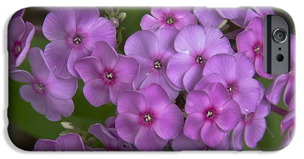 Phlox iPhone Cases - Magenta Phlox iPhone Case by Teresa Mucha