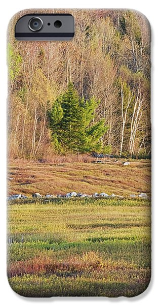 Maine Blueberry Field In Spring iPhone Case by Keith Webber Jr
