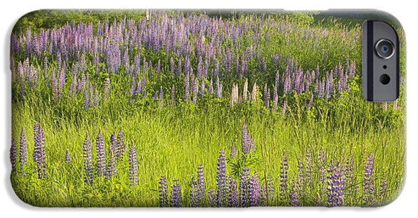Northeast iPhone Cases - Maine Wild Lupine Flowers iPhone Case by Keith Webber Jr