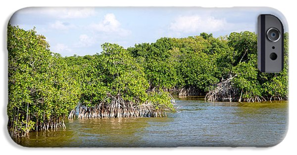 Best Sellers -  - Mangrove Forest iPhone Cases - Mangrove Forest iPhone Case by Carol Ailles