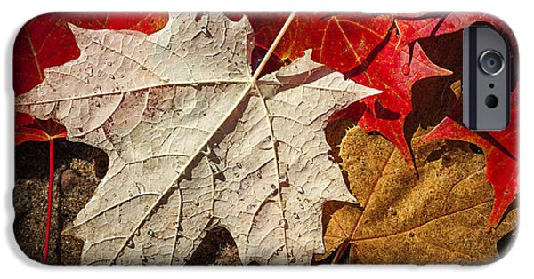 Fall iPhone Cases - Maple leaves in water iPhone Case by Elena Elisseeva