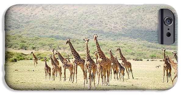 East Africa Photographs iPhone Cases - Masai Giraffes Giraffa Camelopardalis iPhone Case by Panoramic Images