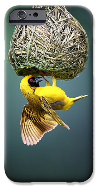 Buildings iPhone Cases - Masked weaver at nest iPhone Case by Johan Swanepoel