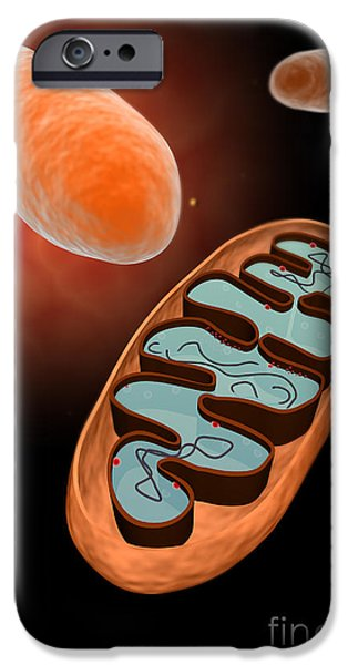 Triphosphate iPhone Cases - Microscopic View Of Mitochondria iPhone Case by Stocktrek Images