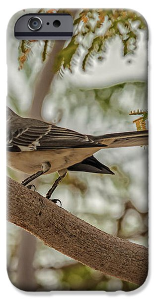 Mockingbird iPhone Case by Robert Bales