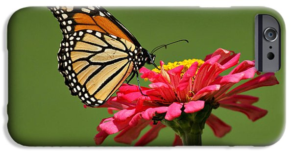 Indiana Flowers iPhone Cases - Monarch Butterfly iPhone Case by Sandy Keeton