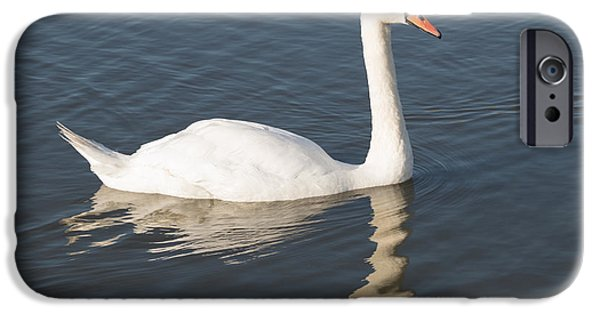 Fauna iPhone Cases - Mute Swan iPhone Case by Robert Carr