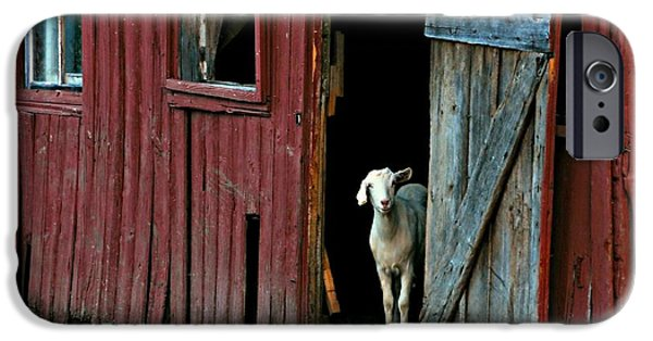 Old Barns iPhone Cases - My Little Friend iPhone Case by Diana Angstadt