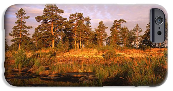 Pines iPhone Cases - National Park VALAAMSKY iPhone Case by Anonymous
