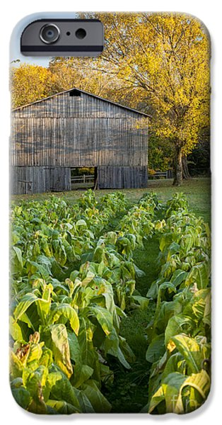 Old Tobacco Barn iPhone Case by Brian Jannsen