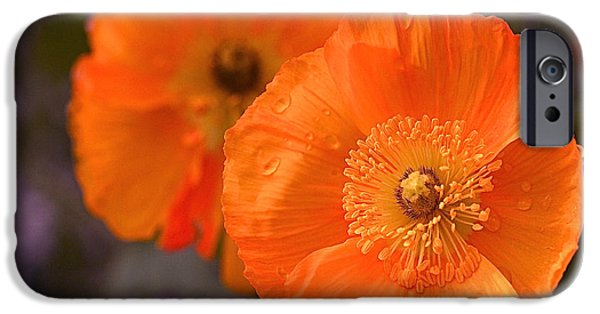 Flora iPhone Cases - Orange Poppies iPhone Case by Rona Black