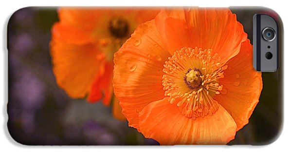Floral Art iPhone Cases - Orange Poppies iPhone Case by Rona Black