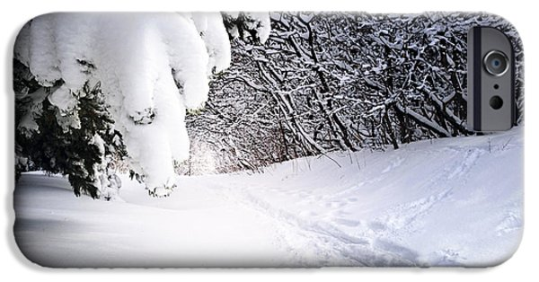 Snowy iPhone Cases - Path in winter forest iPhone Case by Elena Elisseeva