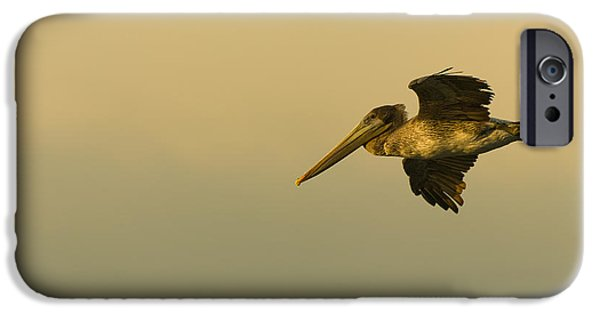 Sea Birds Photographs iPhone Cases - Pelican iPhone Case by Sebastian Musial