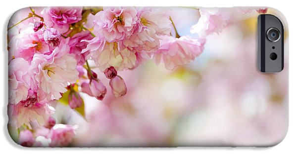Cherry Blossoms Photographs iPhone Cases - Pink cherry blossoms  iPhone Case by Elena Elisseeva