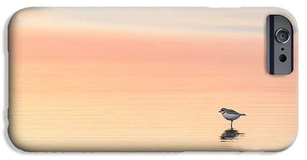 Minimalism iPhone Cases - Piping Plover iPhone Case by Bill  Wakeley