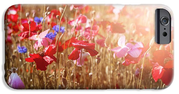 Meadow Photographs iPhone Cases - Poppies in sunshine iPhone Case by Elena Elisseeva
