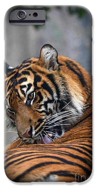 Wildlife Photographer Mixed Media iPhone Cases - Portrait of a Tiger iPhone Case by Jim Fitzpatrick