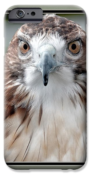 Matting iPhone Cases - Predatorial Glare iPhone Case by Charles Feagans