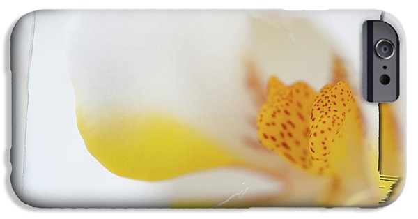 White Orchid iPhone Cases - Pure White iPhone Case by Sebastian Musial