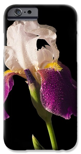 Yellow Bearded Iris iPhone Cases - Purple And White Bearded Iris iPhone Case by Keith Webber Jr
