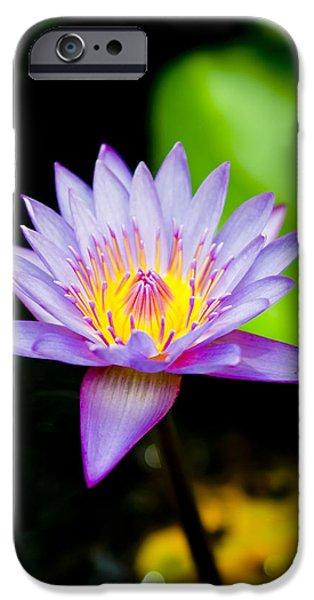 Close Focus Floral iPhone Cases - Purple lotus  iPhone Case by Raimond Klavins