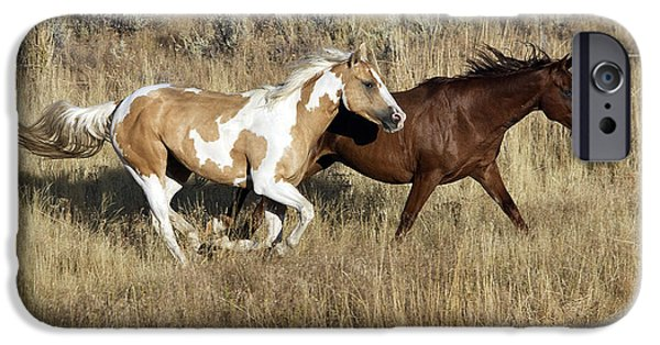 American Quarter Horse iPhone Cases - Quarter Or Paint Horses iPhone Case by M. Watson