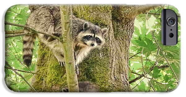 Raccoon iPhone Cases - Raccoon Family iPhone Case by Jennie Marie Schell