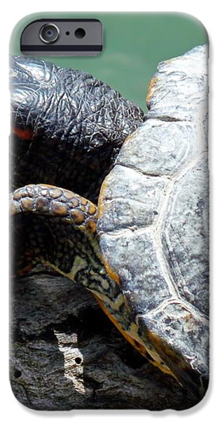 Red Eared Slider iPhone Case by Irfan Gillani