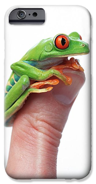 Red-eyed Tree Frog Agalychnis Callidryas iPhone Case by Corey Hochachka