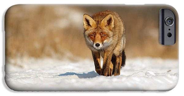 Wild Animals iPhone Cases - Red Fox in the Snow iPhone Case by Roeselien Raimond