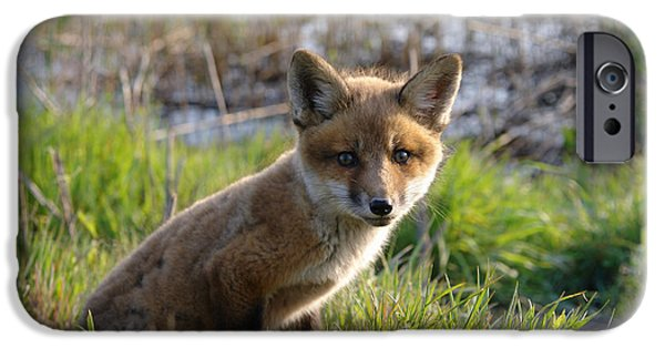 Young Photographs iPhone Cases - Red Fox Kit iPhone Case by Olivier Le Queinec