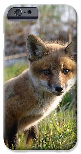 Red Fox Kit iPhone Case by Olivier Le Queinec