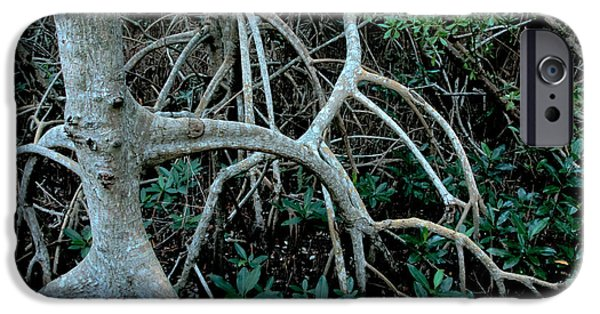Rhizophora Mangle iPhone Cases - Red Mangroves iPhone Case by Mark Newman