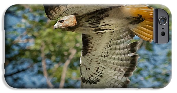 Hawk iPhone Cases - Red Tail Hawk iPhone Case by Bill  Wakeley