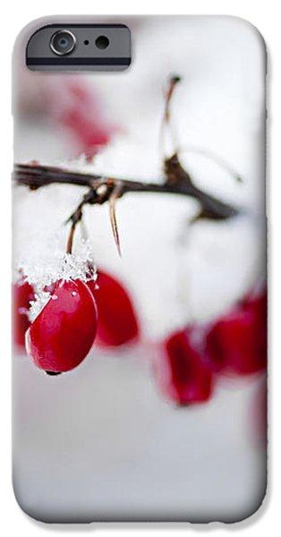 Red winter berries under snow iPhone Case by Elena Elisseeva